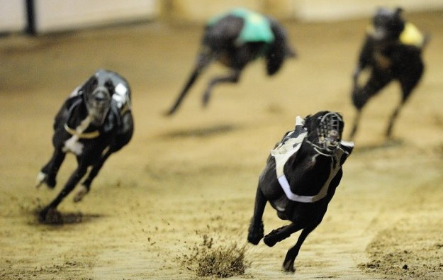 Macau's dog racing track gets concession renewed